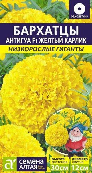 Бархатцы Антигуа Желтый карлик/Сем Алт/цп 5 шт. Низкорослые гиганты