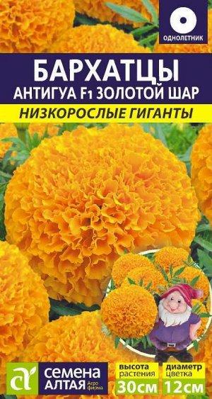 Бархатцы Антигуа Золотой шар/Сем Алт/цп 5 шт. Низкорослые гиганты