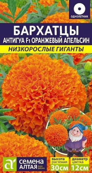 Бархатцы Антигуа Оранжевый апельсин/Сем Алт/цп 5 шт. Низкорослые гиганты