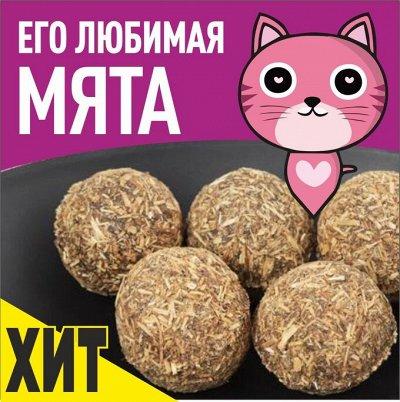 """Karmy - корм для собак и кошек премиум класса! №30 — ХИТ! Игрушка - """"Кошачья мята"""" — Игрушки"""