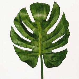 Лист монстеры большой .  Искусственное растение