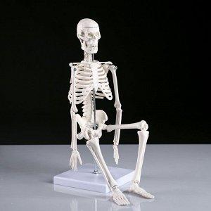 """Макет """"Скелет человека"""" 45см"""