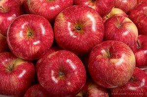 Яблоня Мантет (подвой сеянцы) высота от 120см
