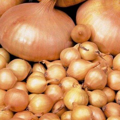 Лук севок предзаказ на весну 2021. Оплата 50/50 Свободное — Лук  севок 0,5 кг (Россия, по голландской технологии ) — Семена овощей