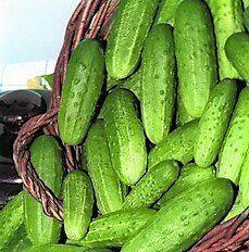 Богатый выбор семян и разные огородные нужности.(Наличие) — Огурцы, томаты, перец. — Семена овощей