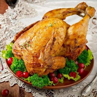 Domosed.online. Индейка и курица. — Индейка ИндиЛайт, Россия. В — Птица