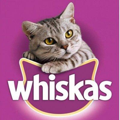 Нашим любимцам: Whiskas, Kitekat, Sheba, Pedigree, Chappi — Сухой корм для кошек WHISKAS — Корма