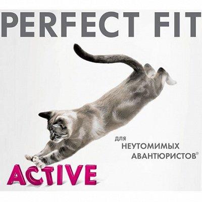 Нашим любимцам: Whiskas, Kitekat, Sheba, Pedigree, Chappi — Сухой и влажный корм для кошек PERFECT FIT — Корма