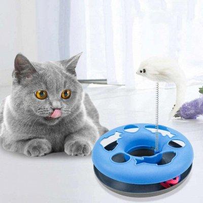 Domosed.online - Товары для животных — Игрушки-резвушки для кошек — Игрушки