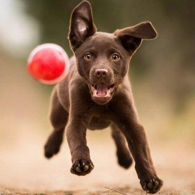 Domosed.online - Товары для животных — Игрушки-резвушки для собак — Игрушки