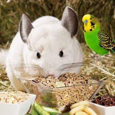 Domosed.online - Товары для животных — Все для птиц и грызунов — Для грызунов