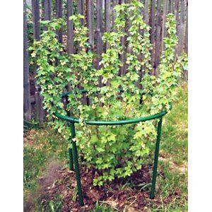 Наша грядка- 3☘️ — Кустодержатели — Садовый декор