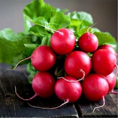 Богатый выбор семян и разные огородные нужности.(Наличие) — Редька, редис, брюква, репа, дайкон. — Семена овощей
