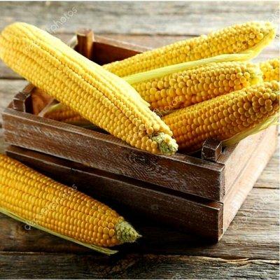 Богатый выбор семян и разные огородные нужности.(Наличие) — Кукуруза, бобовые, подсолнух — Семена овощей