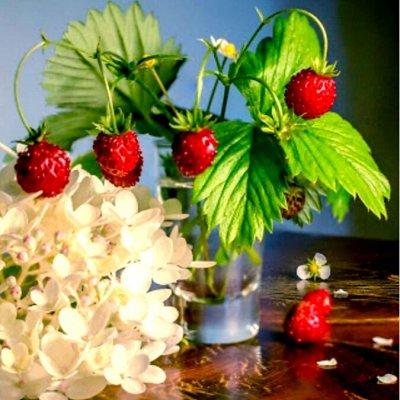 Богатый выбор семян и разные огородные нужности.(Наличие) — Цветы-2 и земляника — Семена многолетние