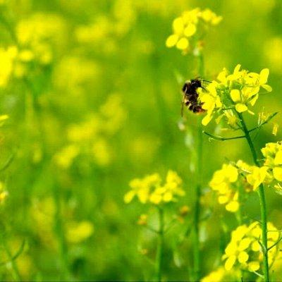 Богатый выбор семян и разные огородные нужности.(Наличие) — Сидераты и травы (вес от 1кг) — Семена зелени и пряных трав