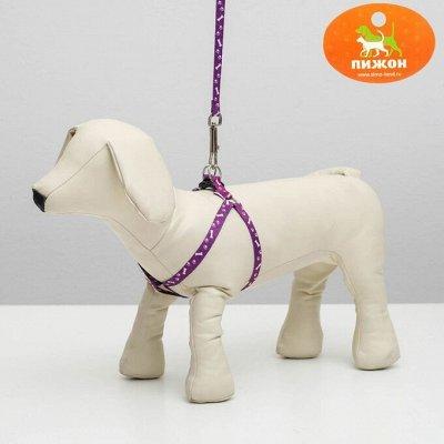 Пижон - для собак - 17 — Комплекты амуниции — Для собак