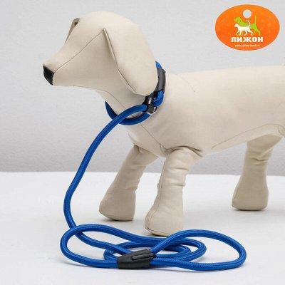 Пижон - для собак - 21 — Ринговки — Аксессуары и одежда