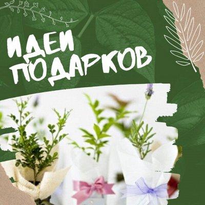 Хищный Sale! Огромный выбор комнатных растений!  — Идеи подарков по поводу и без! :) — Декоративноцветущие