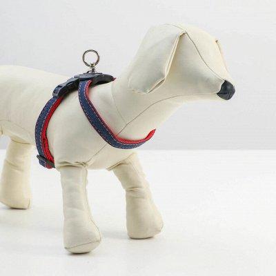 Пижон - для собак - 17 — Шлейки — Для собак