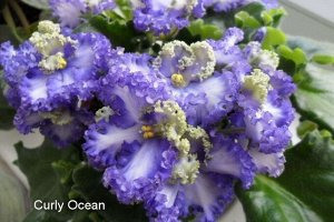 Curly ocean