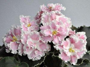 Розовая Акварель (К. Морев)
