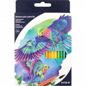 Карандаши цветные акварельные Kite K18-1052, 36 шт.