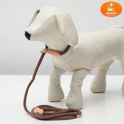 Пижон - для собак - 17 — Ринговки — Для собак