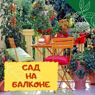 Плодовые! Малиновые деревья! Саженцы гигантской ежевики!  — Плодовые растения для горшков и контейнеров — Плодово-ягодные