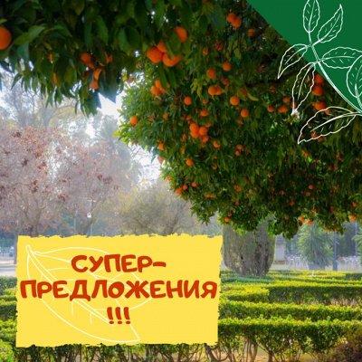 Плодовые! Малиновые деревья! Саженцы гигантской ежевики!  — СУПЕРПРЕДЛОЖЕНИЯ! — Плодово-ягодные