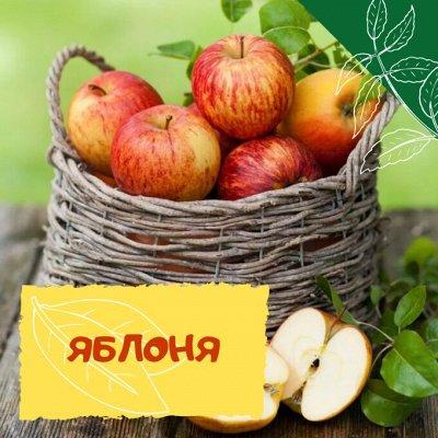 Плодовые! Малиновые деревья! Саженцы гигантской ежевики!  — Яблоня — Плодово-ягодные