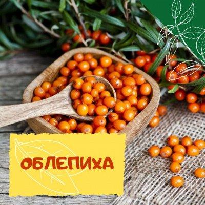 Плодовые! Малиновые деревья! Саженцы гигантской ежевики!  — Облепиха — Плодово-ягодные