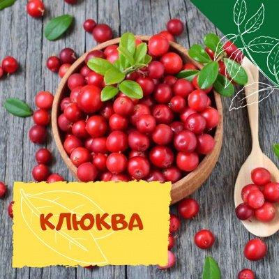 Плодовые! Малиновые деревья! Саженцы гигантской ежевики!  — Клюква — Плодово-ягодные