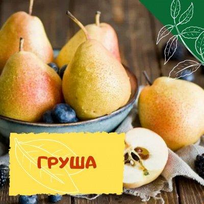 Плодовые! Малиновые деревья! Саженцы гигантской ежевики!  — Груша — Плодово-ягодные