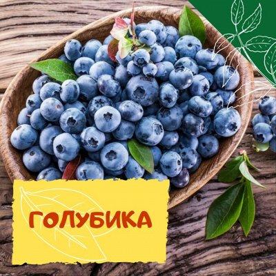 Плодовые! Малиновые деревья! Саженцы гигантской ежевики!  — Голубика — Плодово-ягодные