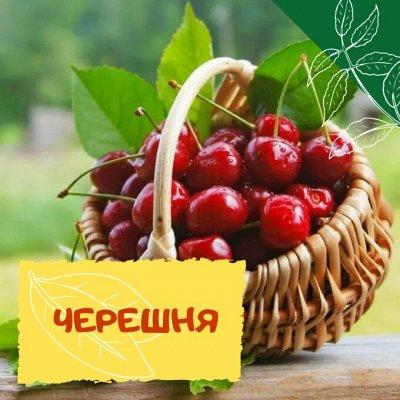 Плодовые! Малиновые деревья! Саженцы гигантской ежевики!  — Черешня — Плодово-ягодные
