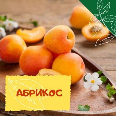 Плодовые! Малиновые деревья! Саженцы гигантской ежевики!  — Абрикос — Плодово-ягодные