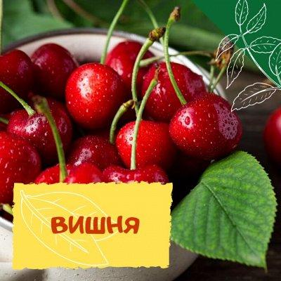 Плодовые! Малиновые деревья! Саженцы гигантской ежевики!  — Вишня — Плодово-ягодные