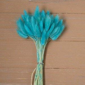 Сухие цветы лагуруса, набор 60 шт, цвет голубой
