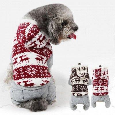 Мурр-маркет! Крутые лежанки Снова в продаже! (08.05.2021) — Одежда для мелких пород — Аксессуары и одежда