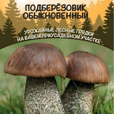 Семена 🍅Уральский дачник 🍅ваш богатый урожай! В наличии!  — Мицелии грибов — Мицелии грибов