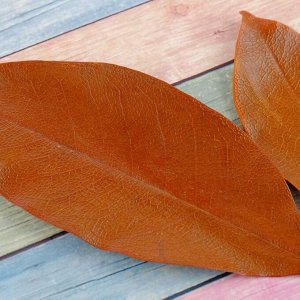 Сухие листья. (набор 2 шт). размер 1 шт: 14.5?5 см. цвет коричневый