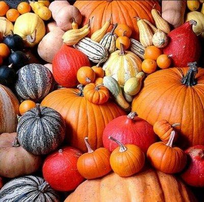 Огромная распродажа семян! +Предзаказ крутого чеснока и лука — Тыква (семена) — Семена овощей