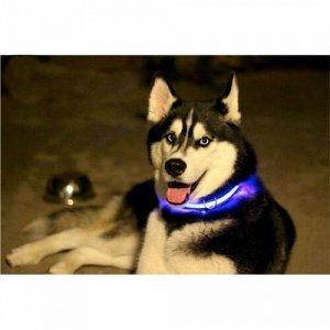 Светящийся ошейник для собак оптом
