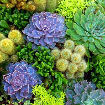 Огромный выбор товаров в наличии! Много сладенького!  — Комнатные растения — Комнатные растения и уход