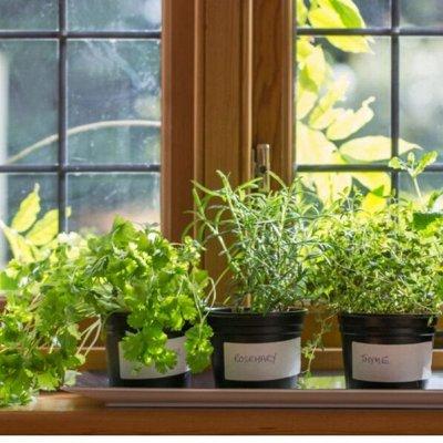 ✓Большой ассортимент товаров для всей семьи✓ — Семена, почвогрунт, удобрения. Сад-огород на балконе! — Семена зелени и пряных трав
