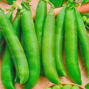Горох овощной Медовик 10 гр.