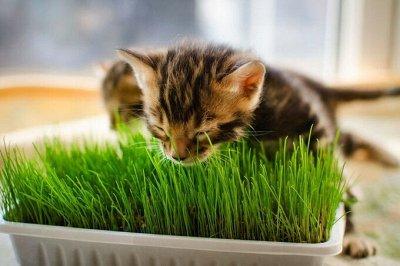 Подготовка к Дачному сезону🏡Семена овощей и цветов от 3руб   — Трава Для Животных — Семена зелени и пряных трав