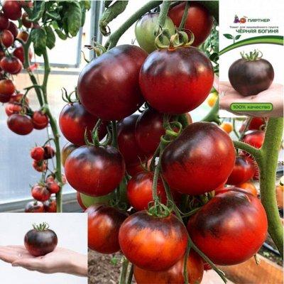 Новые поступления! Семена Партнёр, все для сада, дома, семьи — Семена Партнер и Семко — Семена