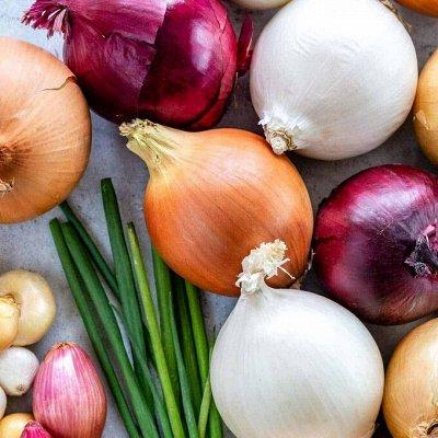 Огромная распродажа семян! +Предзаказ крутого чеснока и лука — Лук-севок НИДЕРЛАНДЫ — Семена овощей